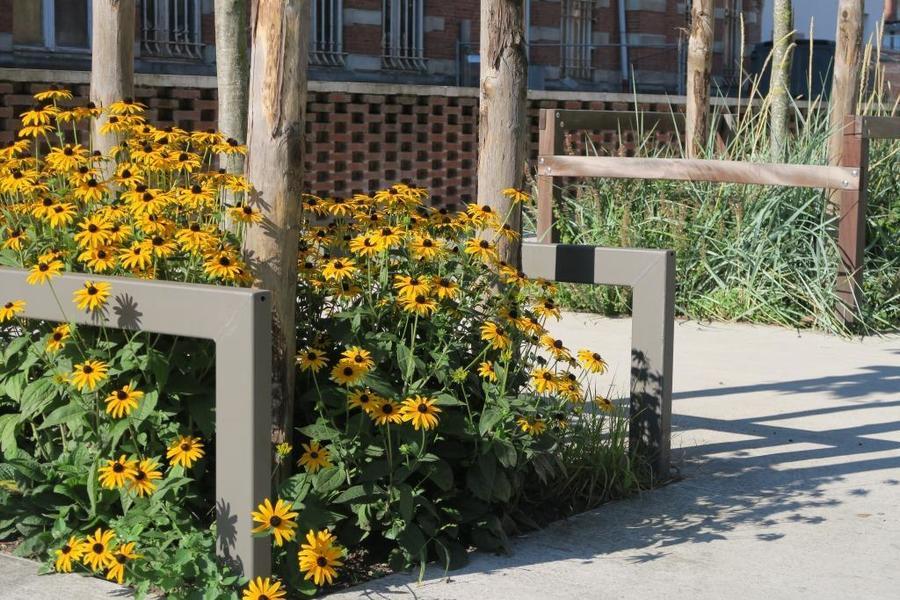 In het Groenkwartier wisselen boomspiegels met gele tinten (bv. gele zonnehoed) af met boomspiegels in blauwe tinten (bv bergsteentijm en zandhaver een blauw/grijs gras).