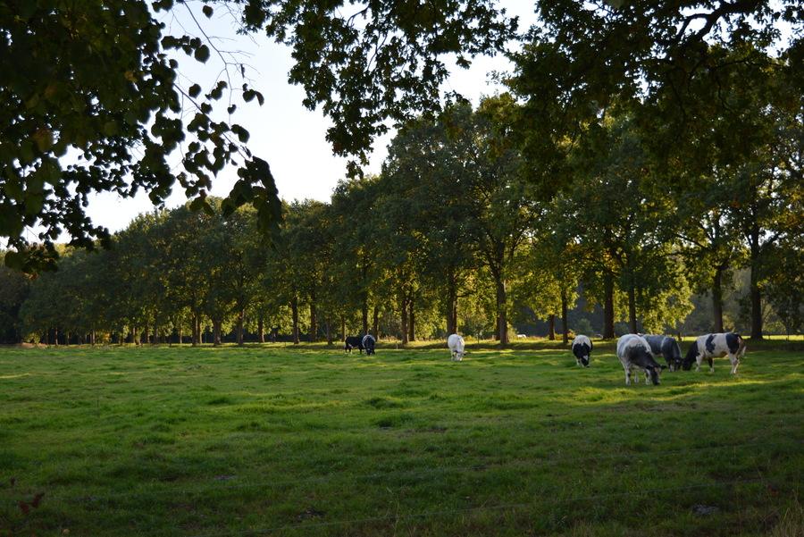 Zuidelijke Kamers, één van de veertien landschappen van het Groenplan.