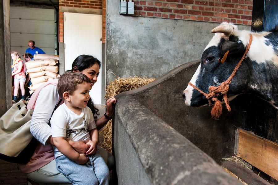 Een mama en haar zoontje kijken naar een koe in de Kinderboerderij van Deurne
