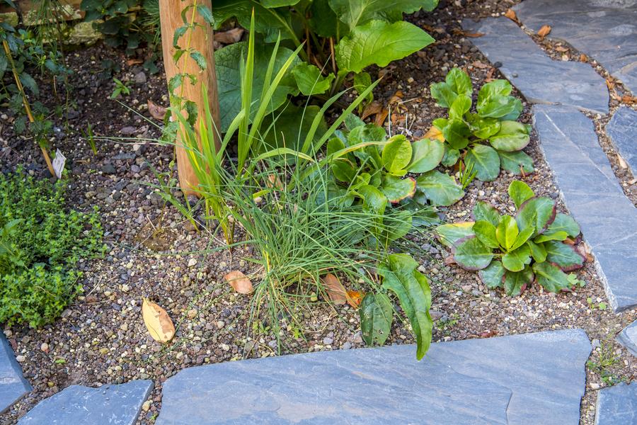 Droogteminnende planten in plantvak