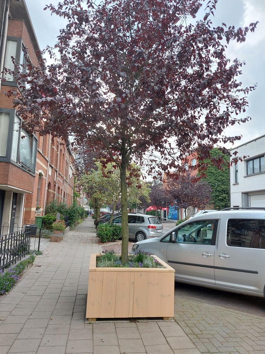 Plantbak Van Praetlei