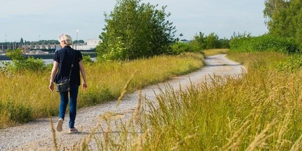 Wandelaar op de Scheldedijk