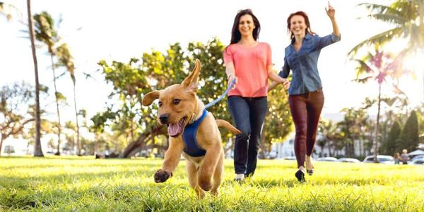 Twee dames gaan wandelen met hun hond