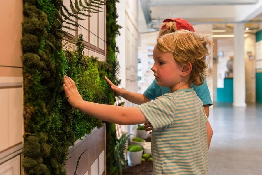 Leer meer over het nut van een groene gevel aan uw woning