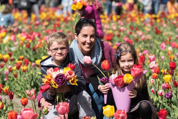 Bloemen plukken op de Tulpenpluk