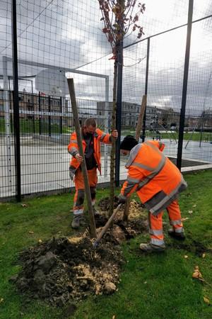medewerkers groendienst planten een boom