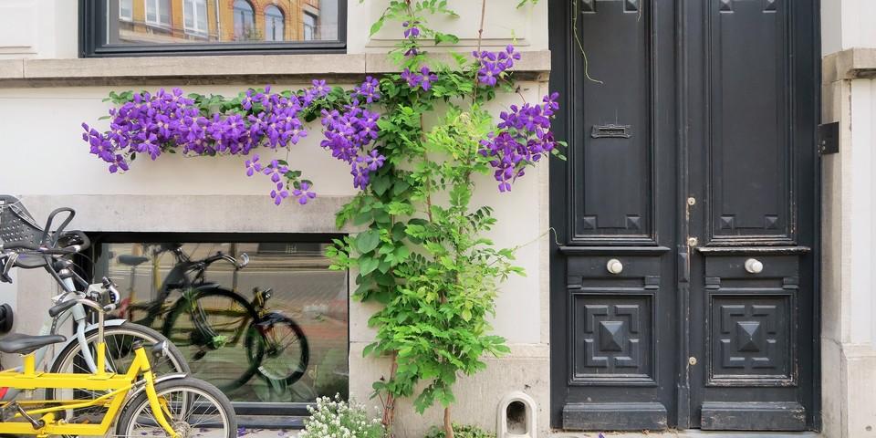 Geveltuin antwerpen planten