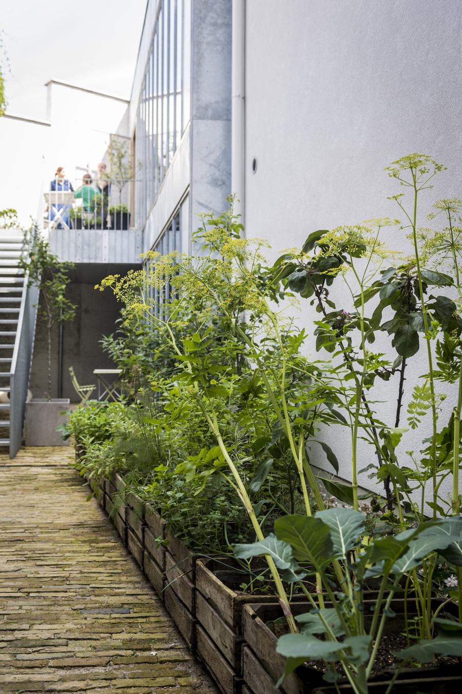 planten in bakken op de patio