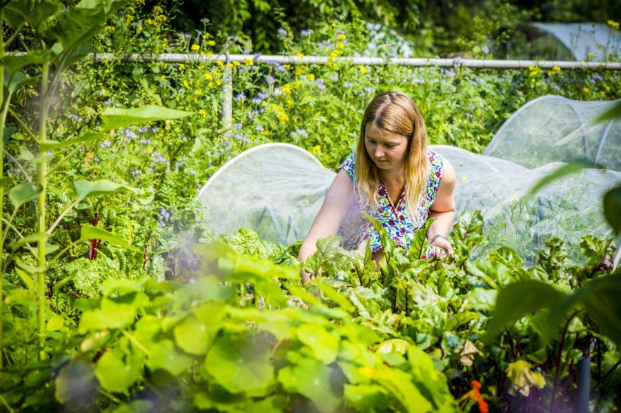 Ook Karin zit graag met haar handen in de grond en haar hoofd in de natuur. Ze kan en wil niet in haar eentje groenten kweken en is blij dat ze via een andere tuinier in deze samentuin terecht is gekomen.