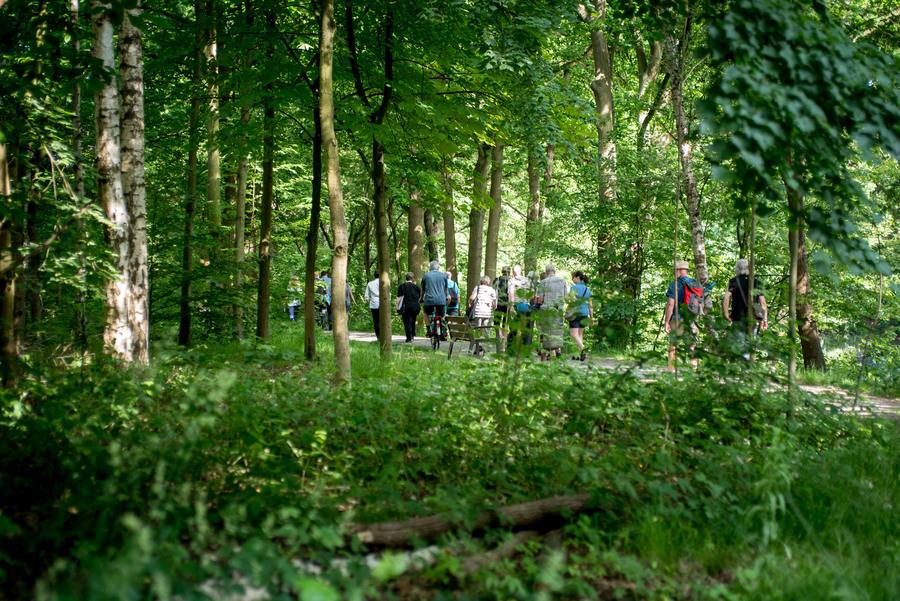 Wandel door het Antwerps groen en ontdek het Groenplan
