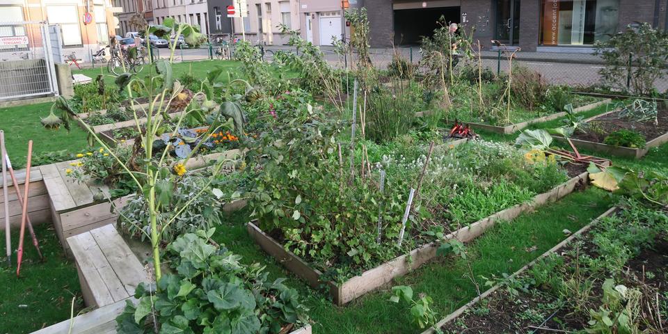 In samentuin Belpairestraat tuinieren buurtbewoners in individuele bakken.