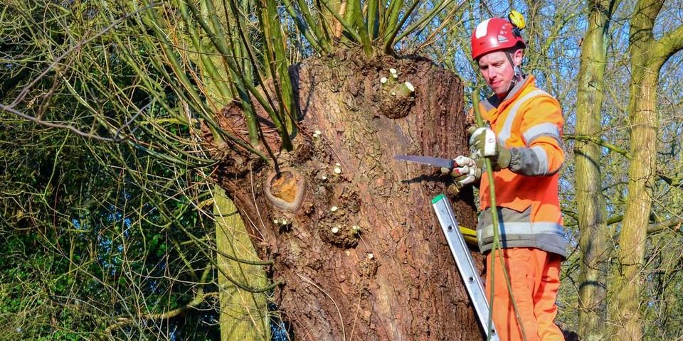 Man die boom aan het snoeien is