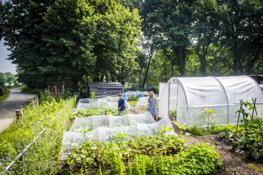 De tuin ligt niet in de onmiddellijke nabijheid van bewoning, toch is er veel passage door andere volkstuiniers en wandelaars.