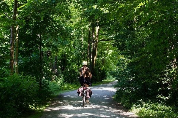Een fietser rijdt over een breed pad omringd door bomen en struiken.