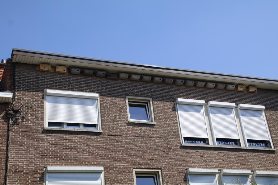 Nestkasten voor gierzwaluwen in Antwerpen.