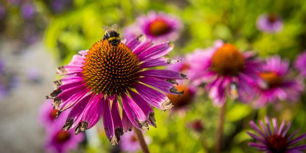 Een bij zit op een bloem