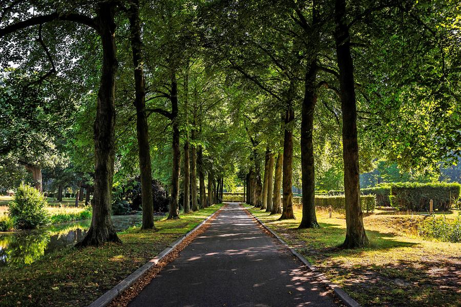 Een groene laan in het begraafpark Schoonselhof