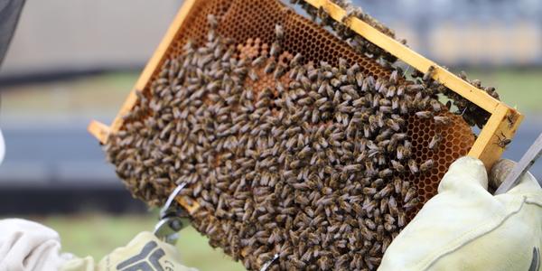 Bijen op een raam