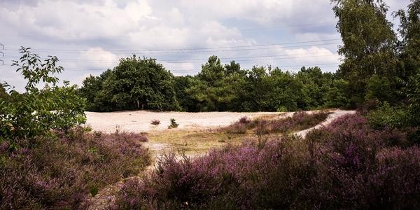 Ruige Heide