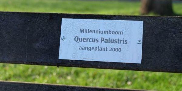 millenniumboom plakkaat