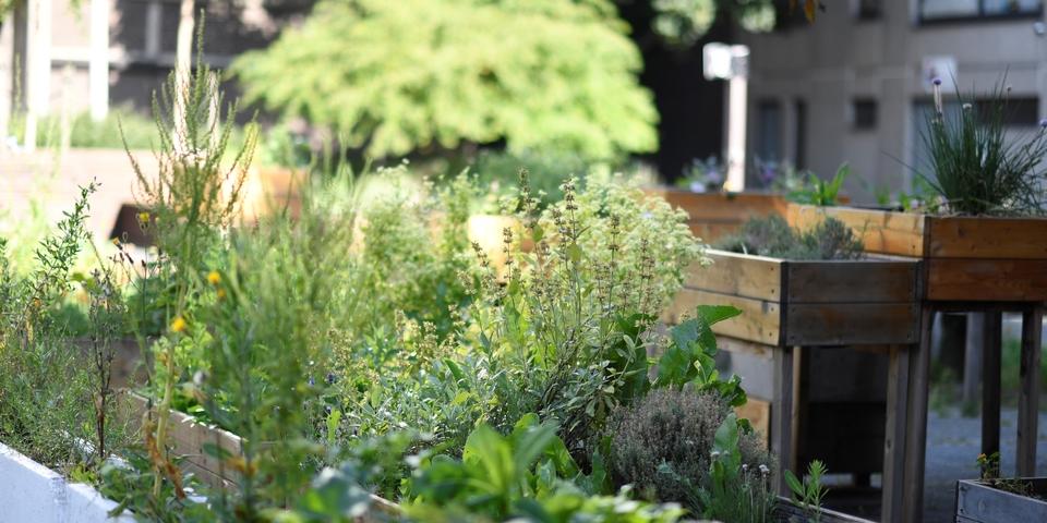 Kruiden en bloemen in plantbakken