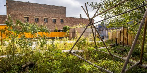 De daktuin op het Scoutshuis, een goed voorbeeld van een klimaatrobuust dak.