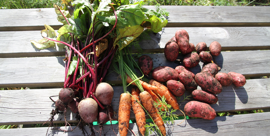 biet, wortel en aardappels net geoogst