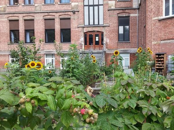 De moestuin met zonnebloemen en frambozen