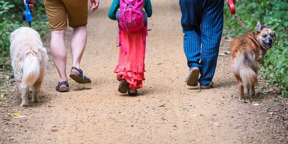 Benen van een wandelend gezin en twee honden.