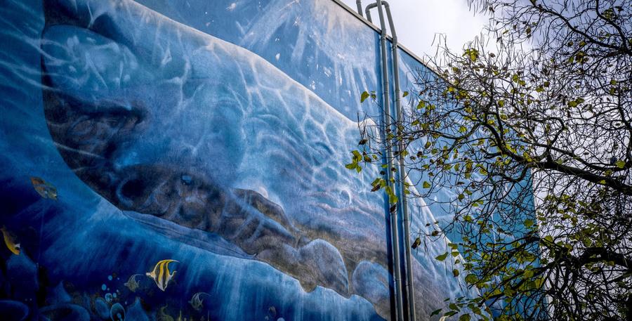 Muurschildering van een potvis op de zijgevel van zwembad Groenenhoek