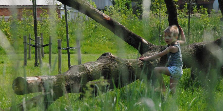 Jongen klimt op boomstam in het Hydepark