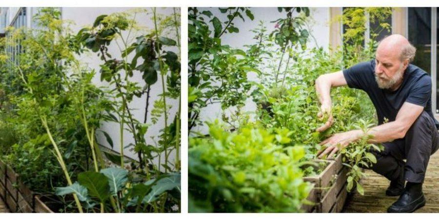 Gelijkvloerse patio met oude fruitkisten om in te tuinieren