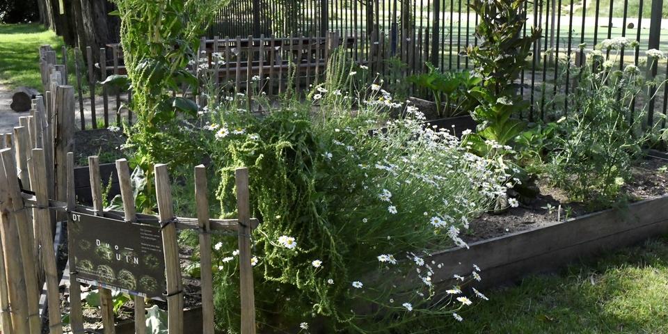Planten en kruiden in de duotuin