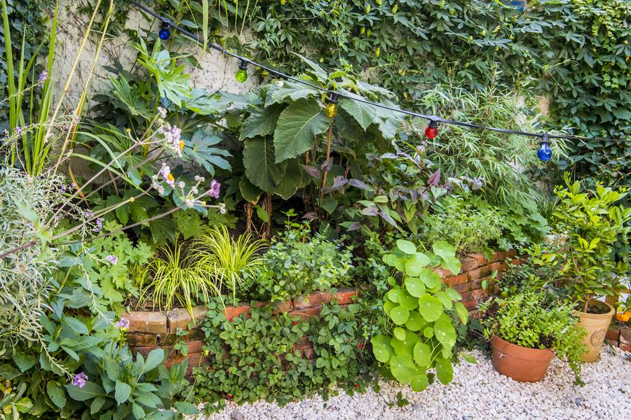 Plantenborder met verschillende weelderige planten