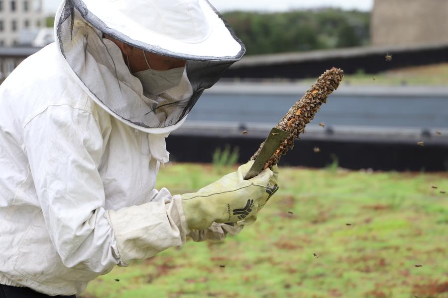 Imker met bijtjes rond hem