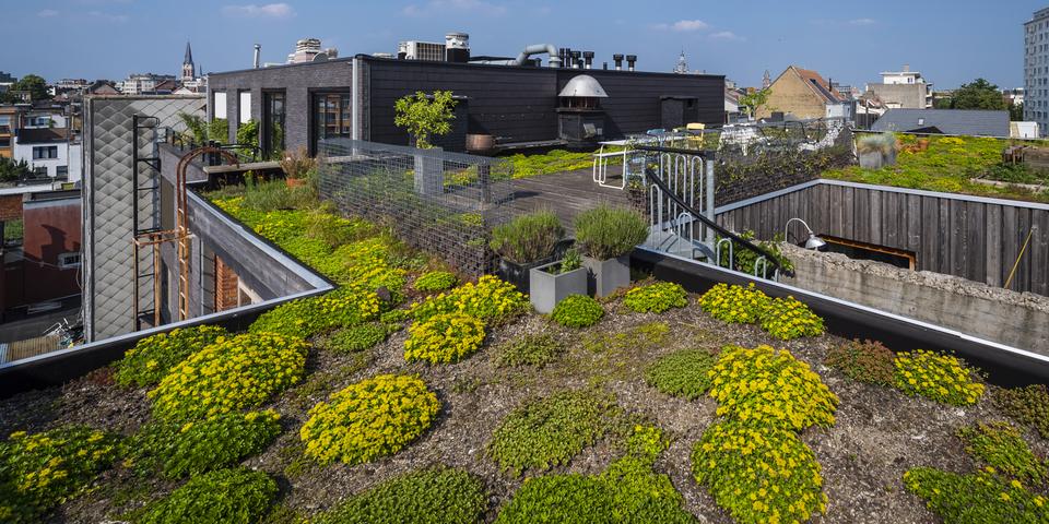 Een groendak met terras