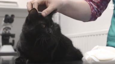 Krijg een subsidie om je huisdier te laten chippen