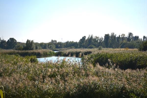 Wetlands, één van de veertien landschappen uit het Groenplan.