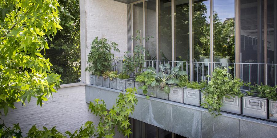 groenten in metalen bakken op het terras