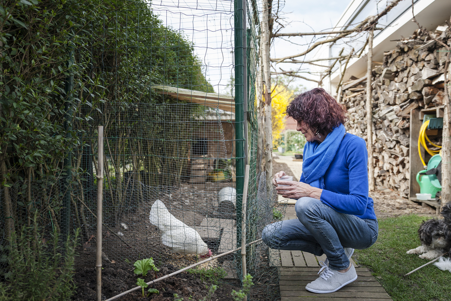 Een kippenren brengt leven in de tuin