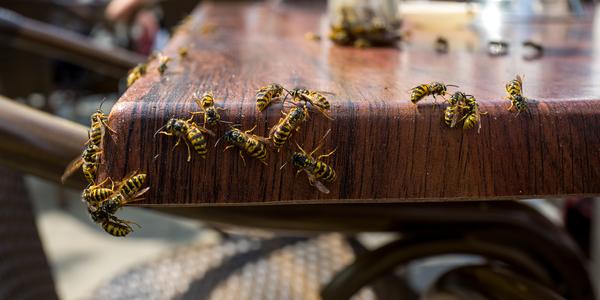 Wespen op een tafel