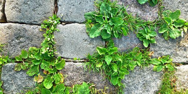Afbeelding van kasseien waartussen groen groeit.