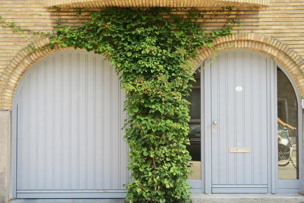 Klimhortensia vult de muur mooi op tussen deur en garagepoort