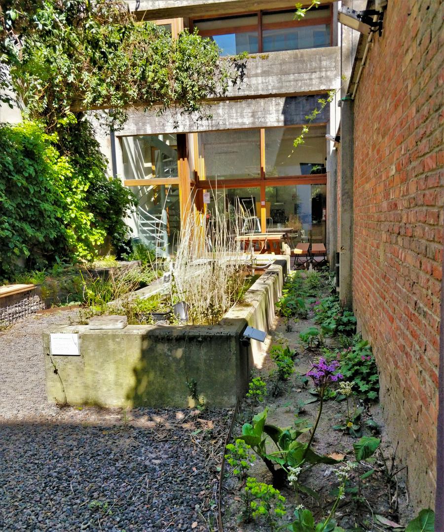 Zicht op het betonnen waterelement en de schaduwplantjes langs de muur.
