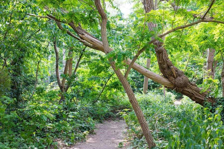 Overhangende bomen en een pad
