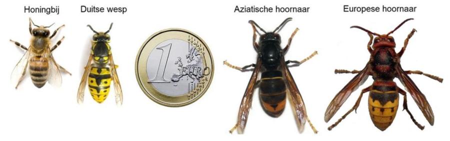 Verschillende types wespen en bijen